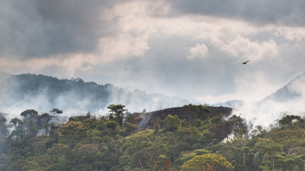 Burning forest for Coca farming
