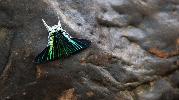 Moth on a rock